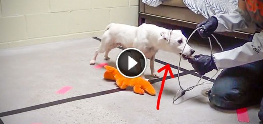 Puppy Mill Dog Makes an Amazing Recovery