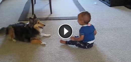 Excited dog makes baby laugh!