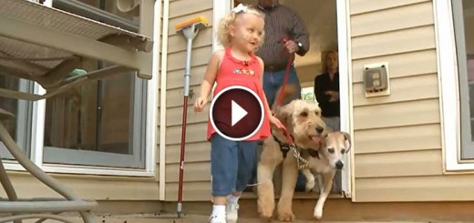 Toddler's dog isn't only a playmate, he's a life saver