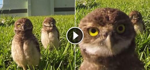 GoPro Owl Dance-Off