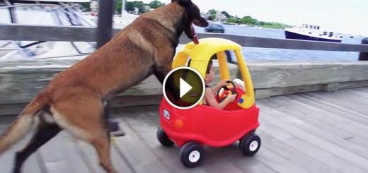 dog trick boy drive