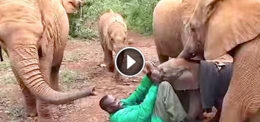elephant kithaka rescue