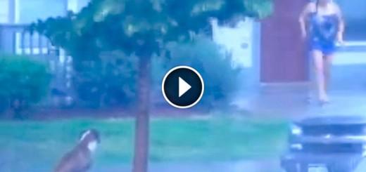 neighbor save dog storm