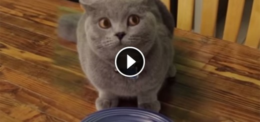 hilarious cat veggies