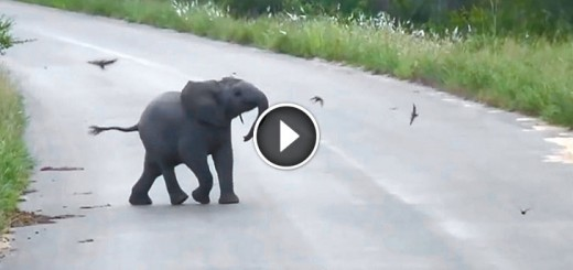 Baby Elephant Calf vs Birds