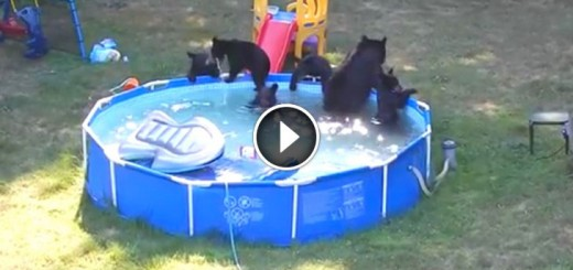 family bears in pool party