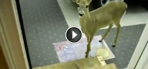 Rescued Deer Pops Out Of The Woods To Join Surrogate Mom For Breakfast