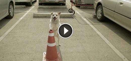 thai dog commercial