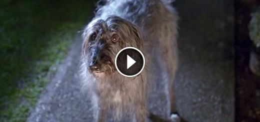 dog escapes owner