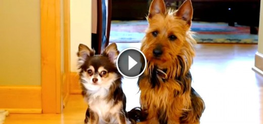 guilty dogs who pooped kitchen