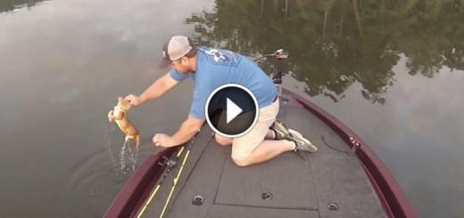 fisherman kitten rescue