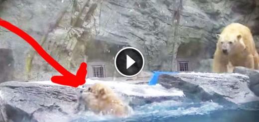 Momma Polar Bear Has Amazing Instincts