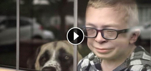 boy injured dog resque