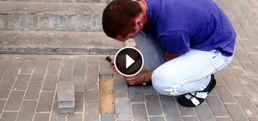 dog traped under sidewalk