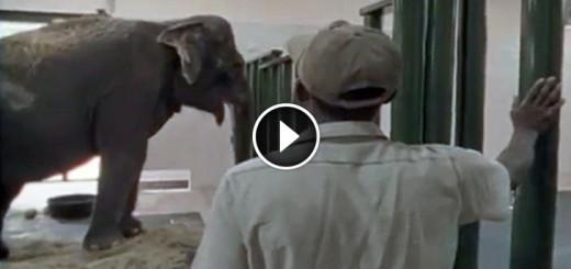 shirley elephant free