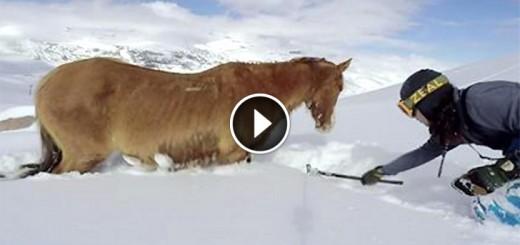 stranded horse snow