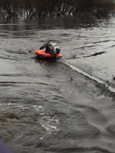 donkey flood rescued 2