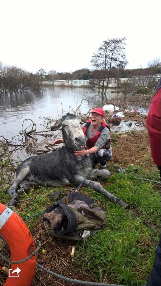 donkey flood rescued